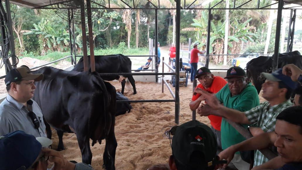 Concurso leiteiro é atração na Feira de Agronegócios