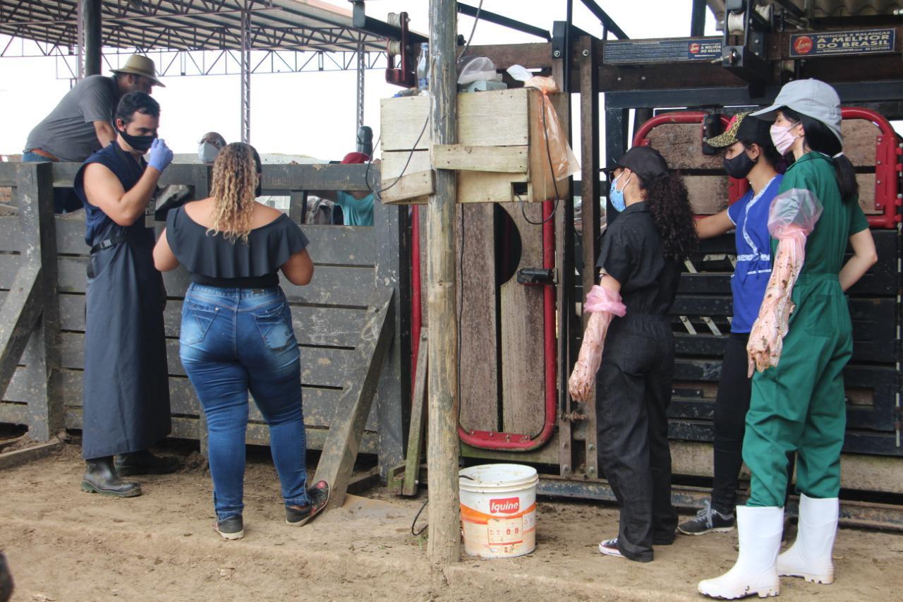 Parceria entre Universidade Nilton Lins e Rancho ING Ferradurinha levam alunos de Medicina Veterinária para procedimentos em vacas Gir e Girolando